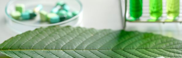 All About Kratom: The Next Legal Way to Get High